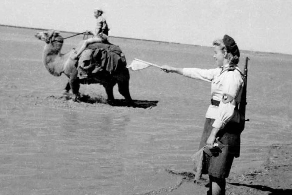 В августе 1945-го Красной армии пришлось преодолевать пустыню Гоби. Пригодились верблюды... Фото: Петр ПАРХОМЕНКО/РИА Новости