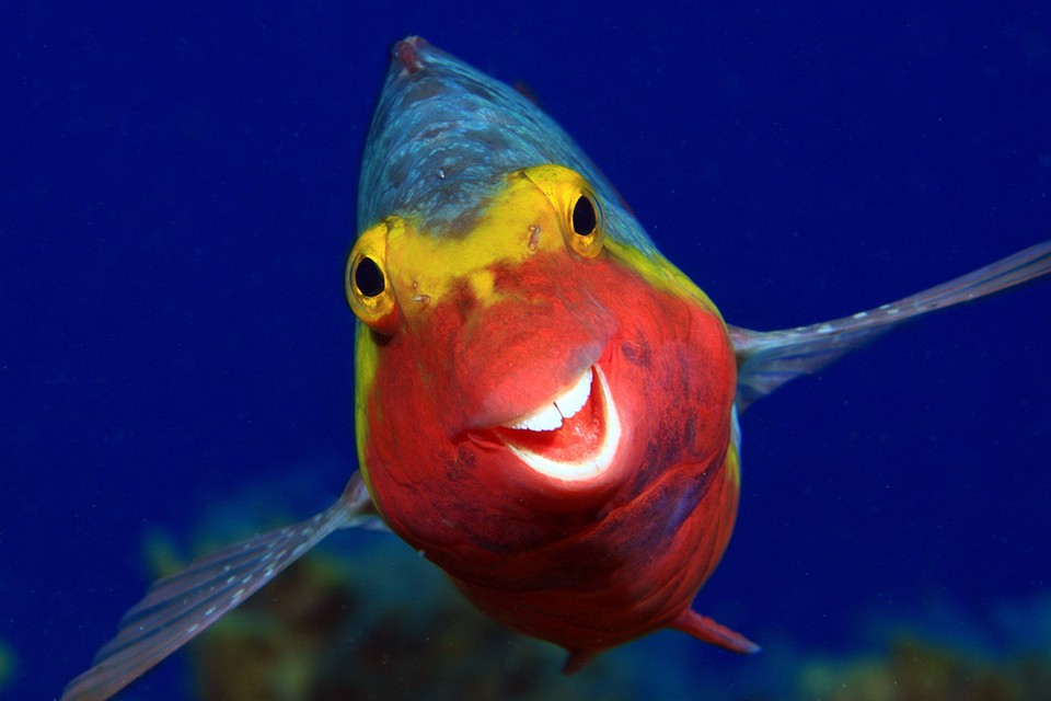 Улыбочка. Эль Йерро, Канарские острова. Фото: Arthur Telle Thiemenn/Comedy Wildlife Photography Awards