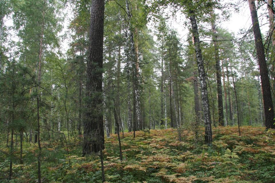 Мужчина пошел в лес, но вместо опят обнаружил необычный камень