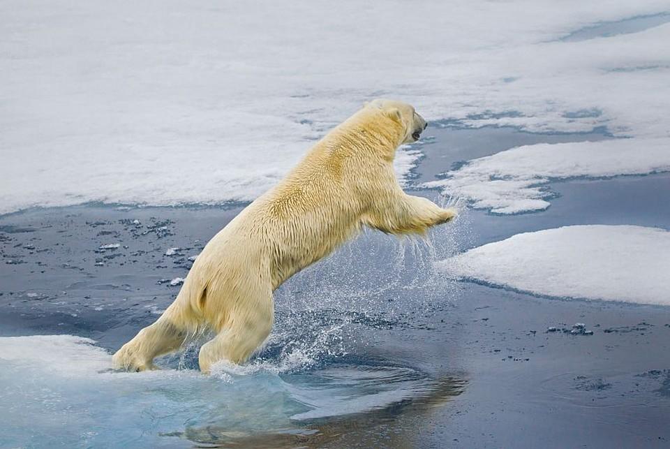 «Газпром нефть» предлагает «потюлениться» под звуки Арктики. Фото - shelf.gazprom-neft.ru.