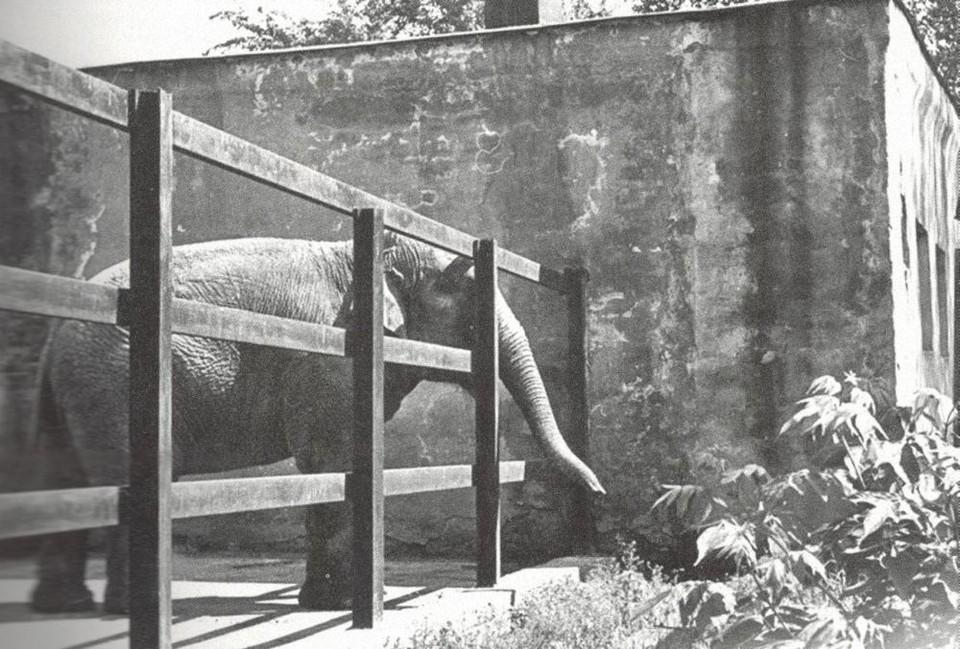 Слоны обитают в нашем зоопарке еще с советских времен. Фото: Евгения Клавдиенко, Екатеринбургский зоопарк