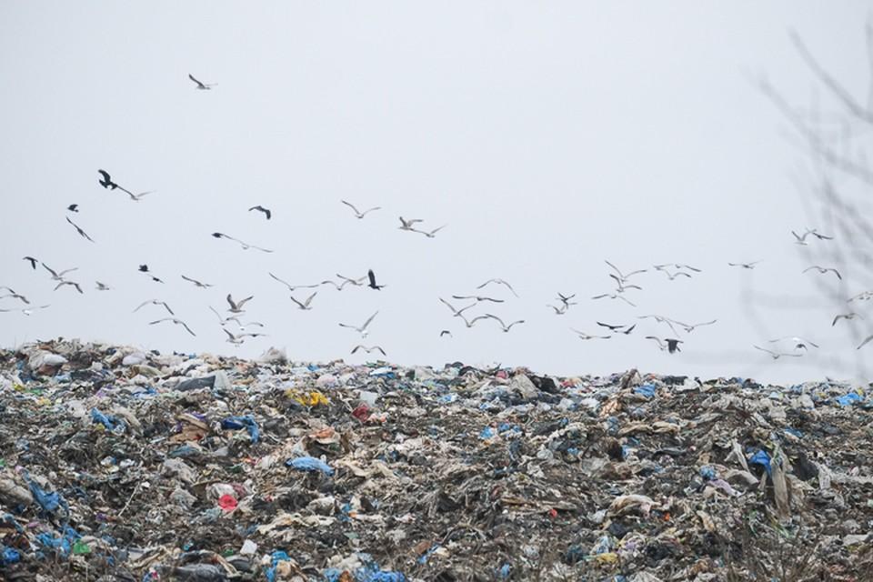 Незаконная свалка нанесла экологии Санкт-Петербурга ущерб в 1,4 миллиард рублей