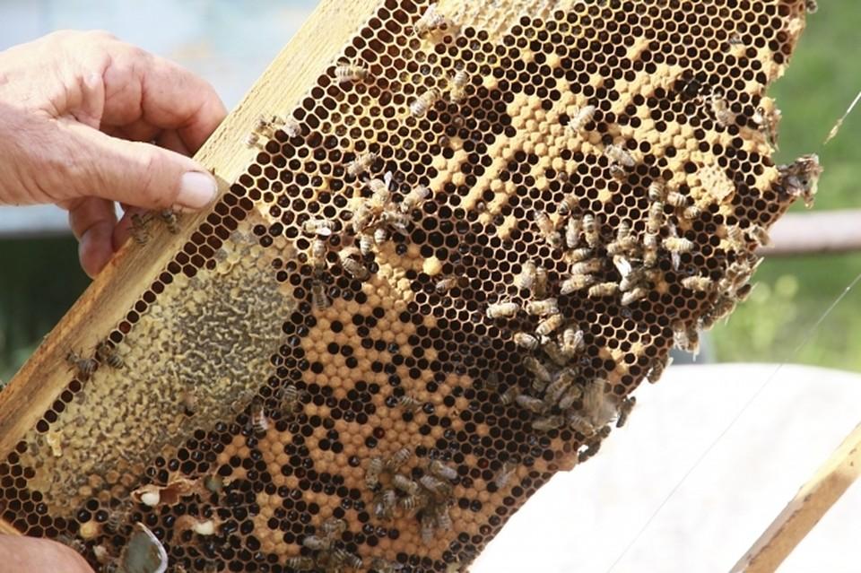 Пчеловодам в Хабаровском крае компенсируют затраты на ведение своего дела