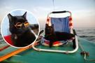Мурчащий морячок: черный кот выходит на яхте в Обское море и обожает волны
