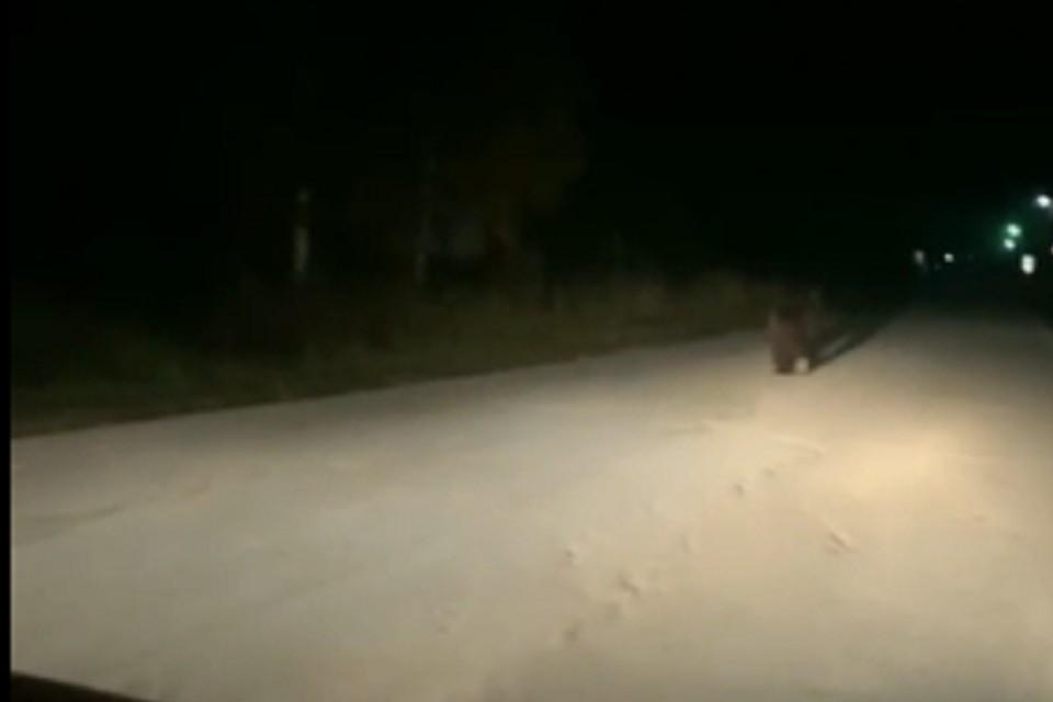Медведь пробежался по улицам Ныроба. Видео: https://vk.com/vknyrob