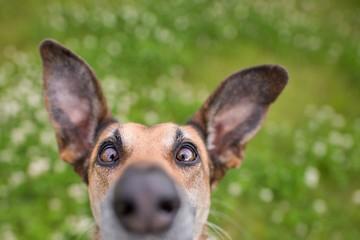 Чихающая собака, зевающий кот и смеющаяся лошадь: названы самые весёлые изображения животных 2020 года
