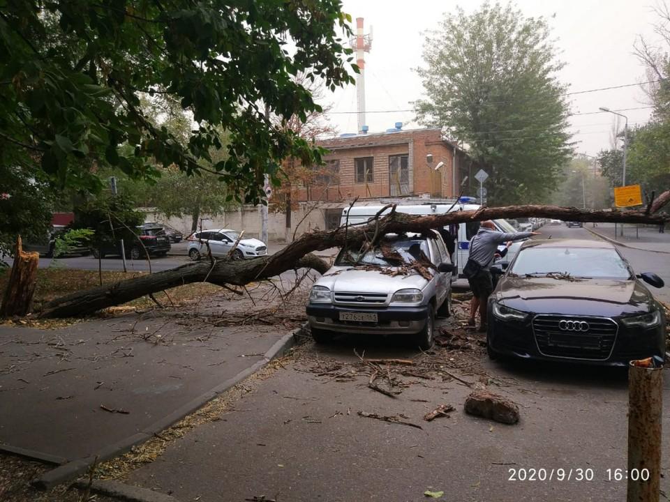 Часто деревья падали на припаркованные машины. Фото: мэрия Ростова-на-Дону