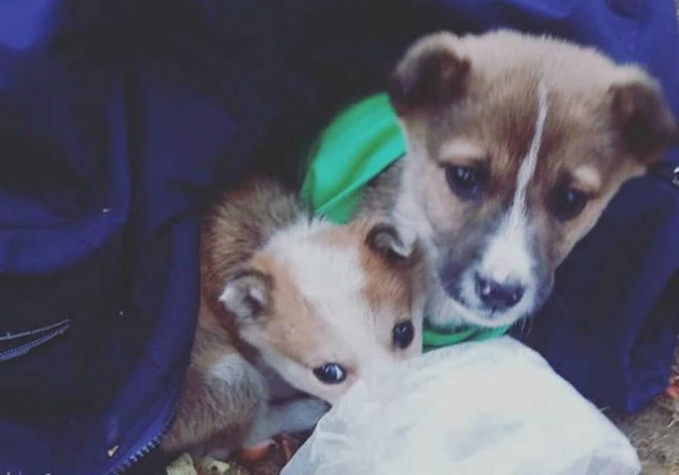 Укрытие из курток и шапок: под Иркутском третьеклассники спасли от мороза двух подкинутых в школу щенков. Фото: соцсети