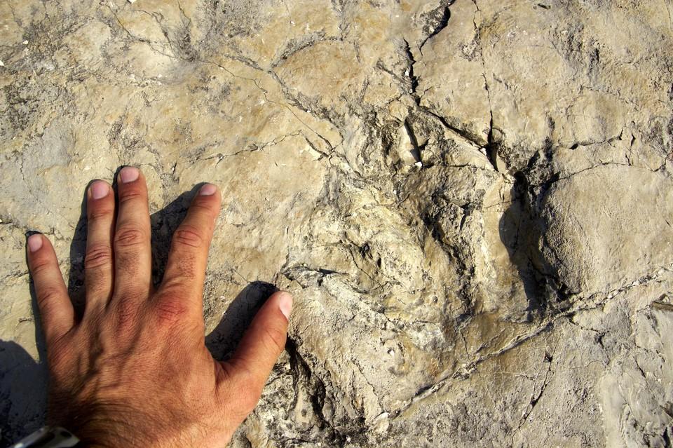 Следы динозавра, жившего на Земле около 130 миллионов лет назад.