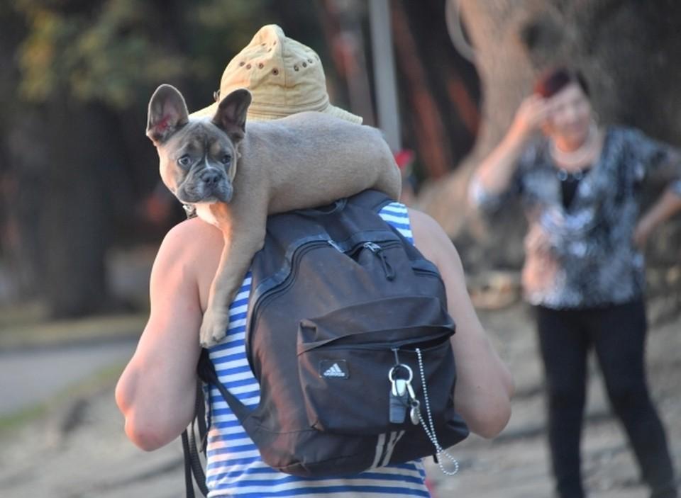 В Балаклаве введён карантин для домашних животных