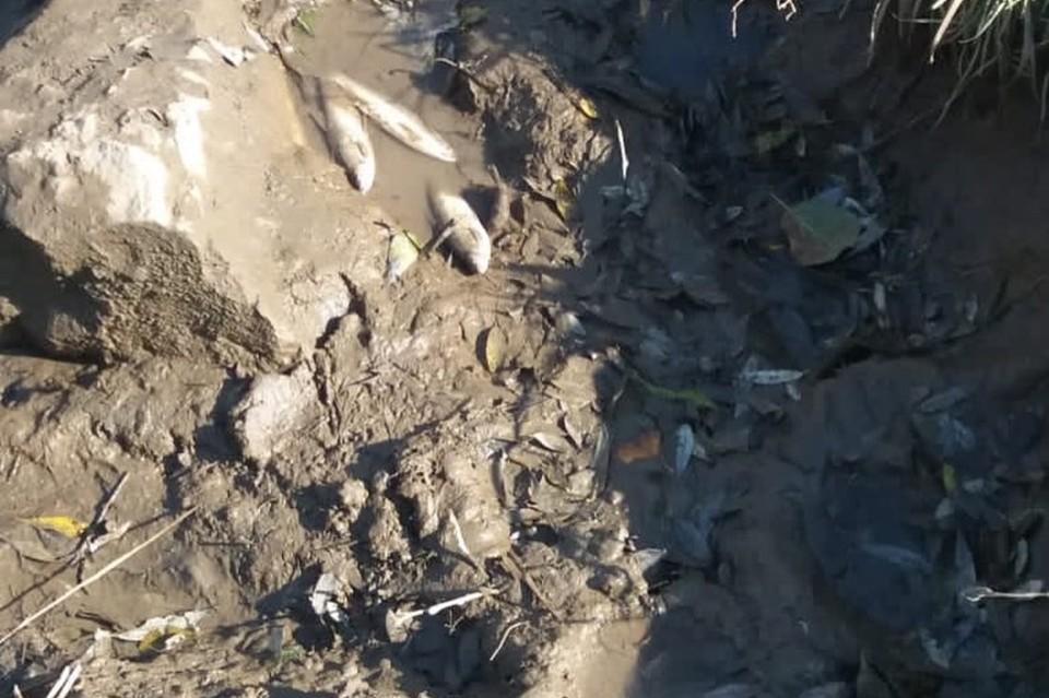 Специалисты подтвердили мор рыбы в реке Артемовка. Фото: администрация Артема