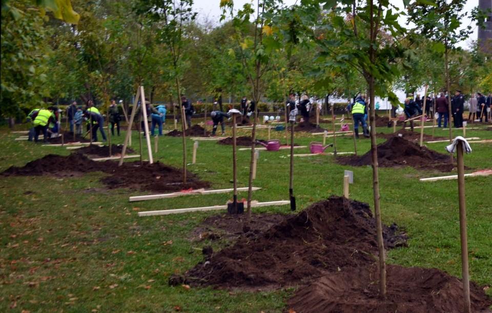За первую половину месячника по благоустройству садовники высадили более 3 тысяч деревьев / Фото: Смольный