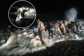 «Волна била так, что нас накрывало с головой»: житель Магадана рассказал, как спасали шестиметровую косатку от гибели