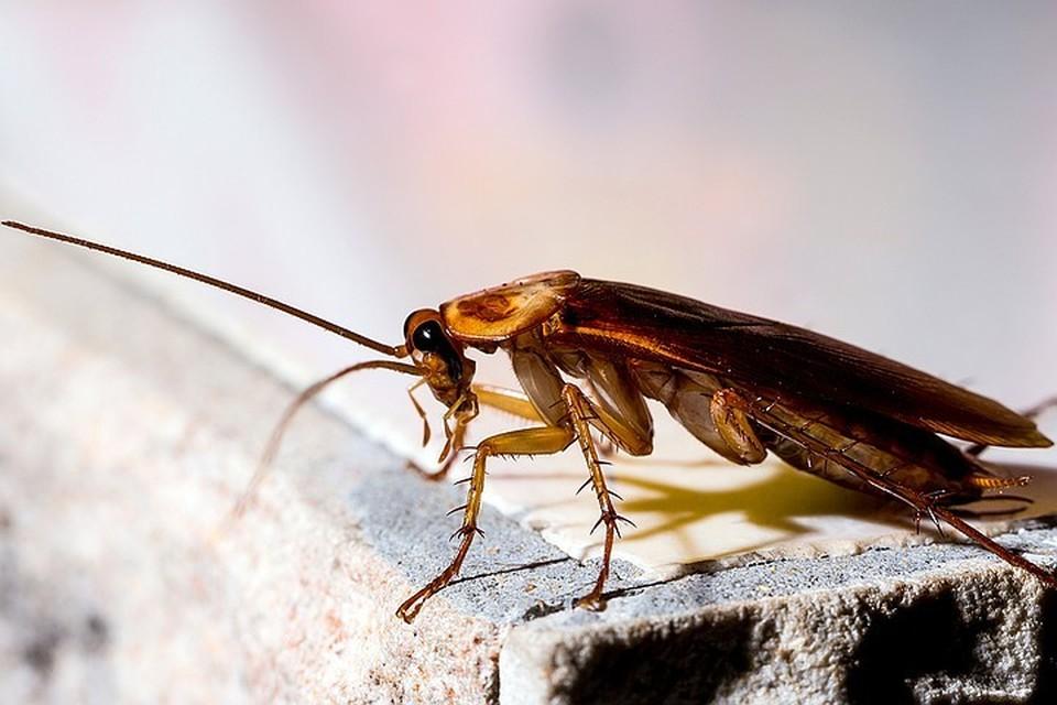 Москвич надышался дихлофосом во время травли тараканов и умер