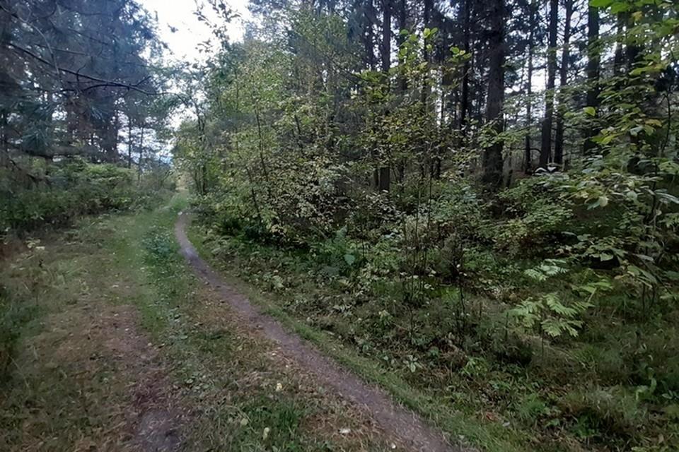 В октябре спасатели искали пропавшего мужчину в лесу, но поиски прошли безрезультатно.