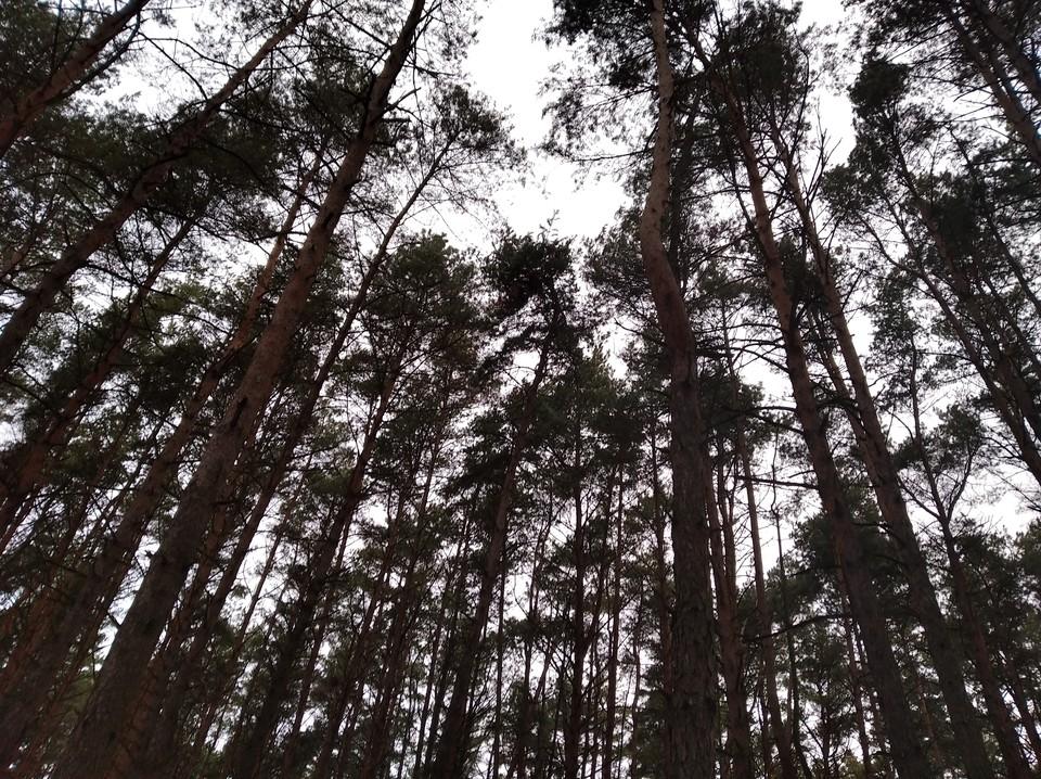 Специальные кормушки оборудуют в лесах