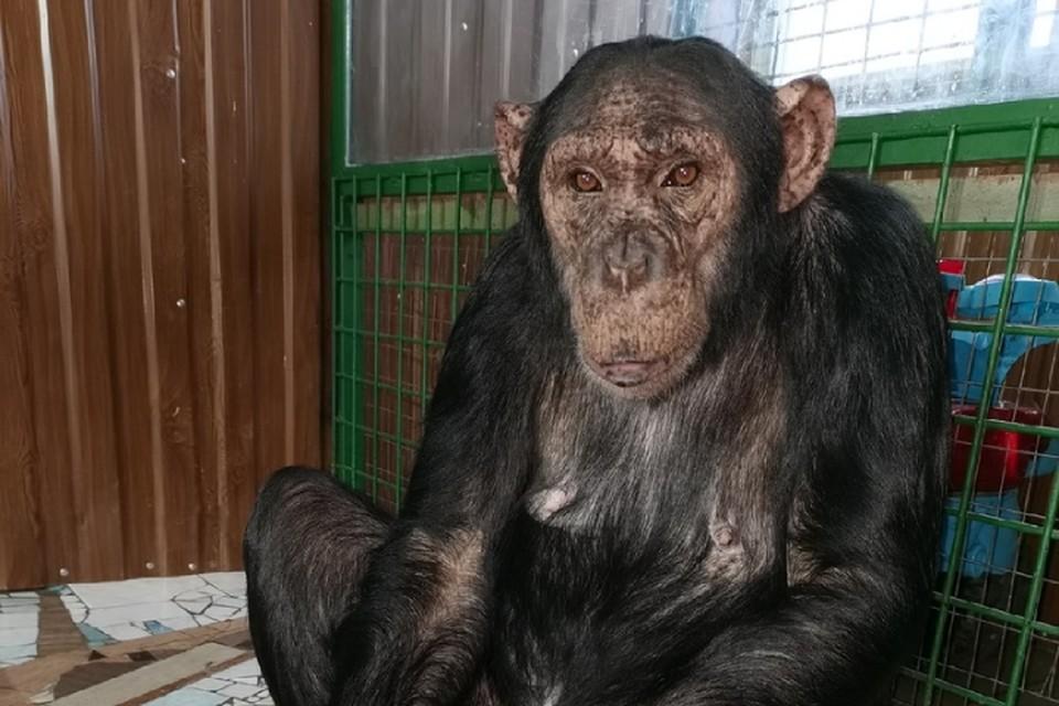 Изоляция, прогревания и витамины: как в иркутских зоопарках защищают от коронавируса приматов и других зверей. Фото: Людмила Ивушкина
