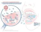 Ученые: Ополаскиватели способны разрушать вирус, вызывающий COVID-19, на 99,9 процентов