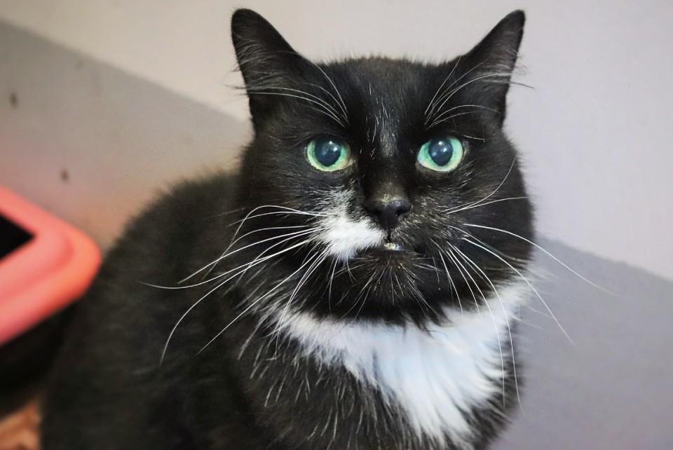 Питомец слегка стеснительный, но очень любит внимание. Фото предоставлено миниприютом «Кошкин дом».