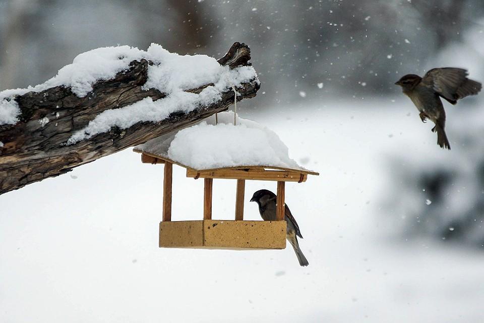 Если вы хотите самостоятельно установить кормушку для птиц, делать это нужно на высоте 1,5 м от земли, подальше от дорог