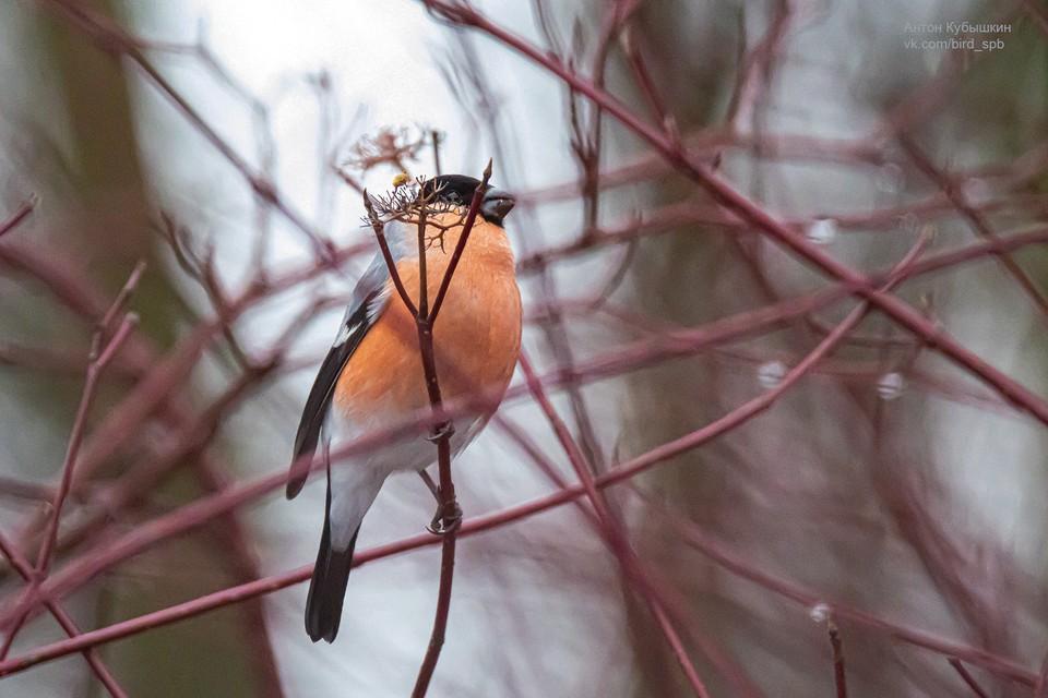 Птиц заметили на Елагином острове Фото: vk.com/kybishkin