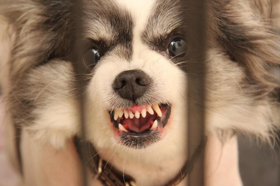 Ребенка три месяца назад укусила бродячая собака.