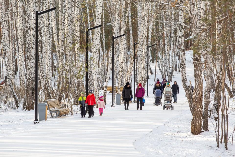 Дерево в преображении городской среды Челябинска в этом году стало еще больше, чем в прошлом.