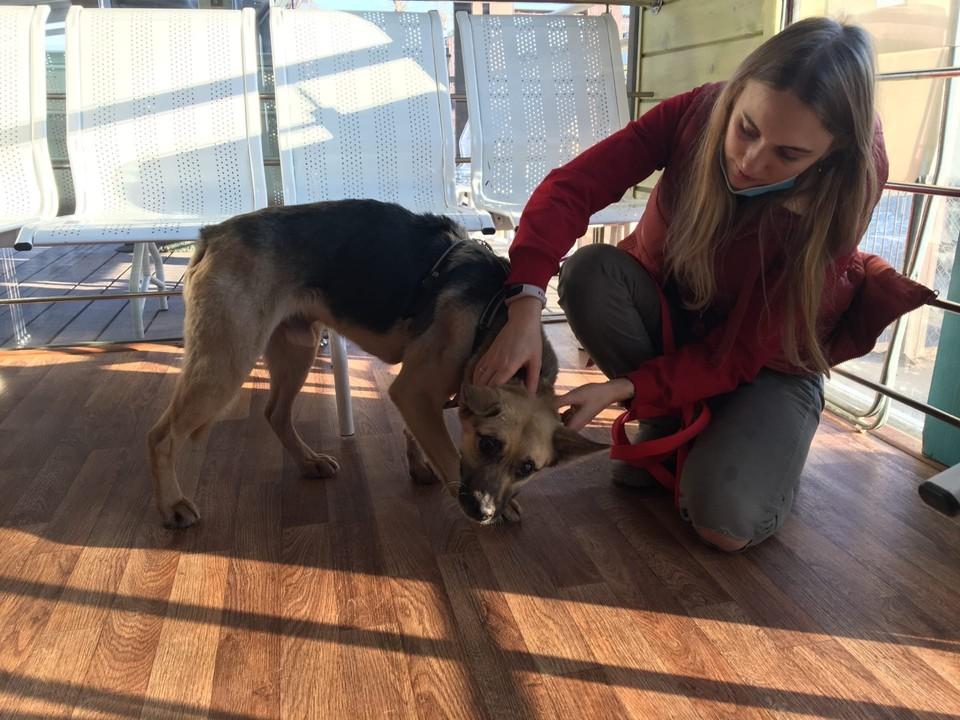 «Поиздевались и решили утопить»: Спасенный в Финском заливе пес ищет хозяев в Нижнем Новгороде