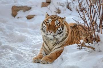 Последствия ледяного шторма грозят массовой гибелью животных в приморской тайге
