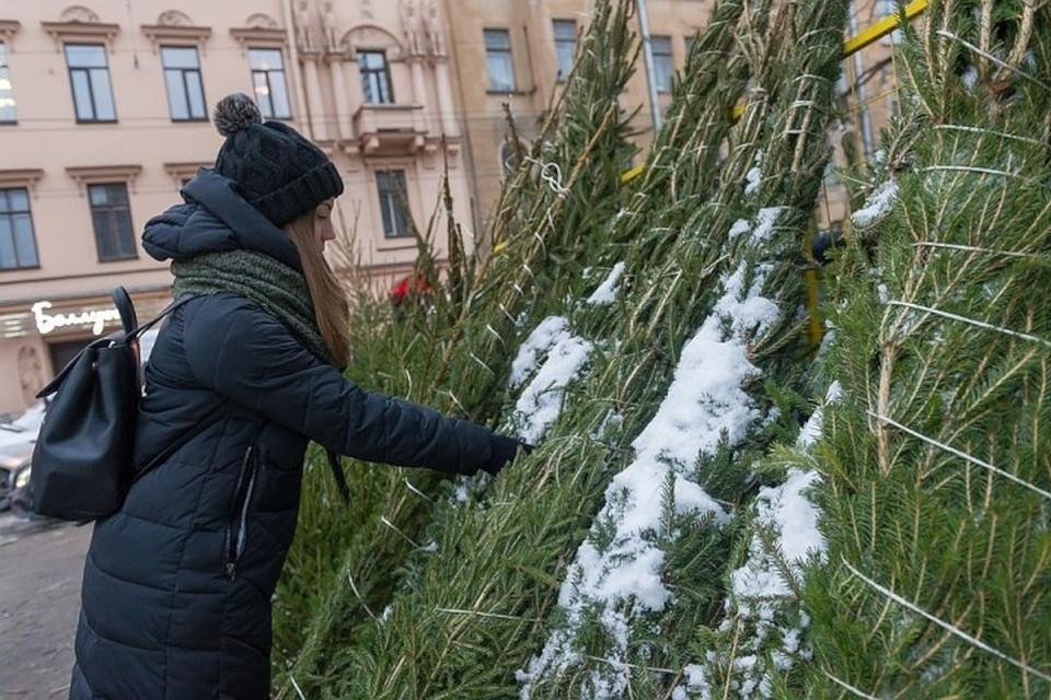 Где купить елку в Твери на Новый год 2021