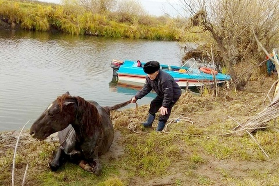 Тюменцы несколько часов тащили лошадь из реки. Фото - ГУ МЧС по Тюменской области.