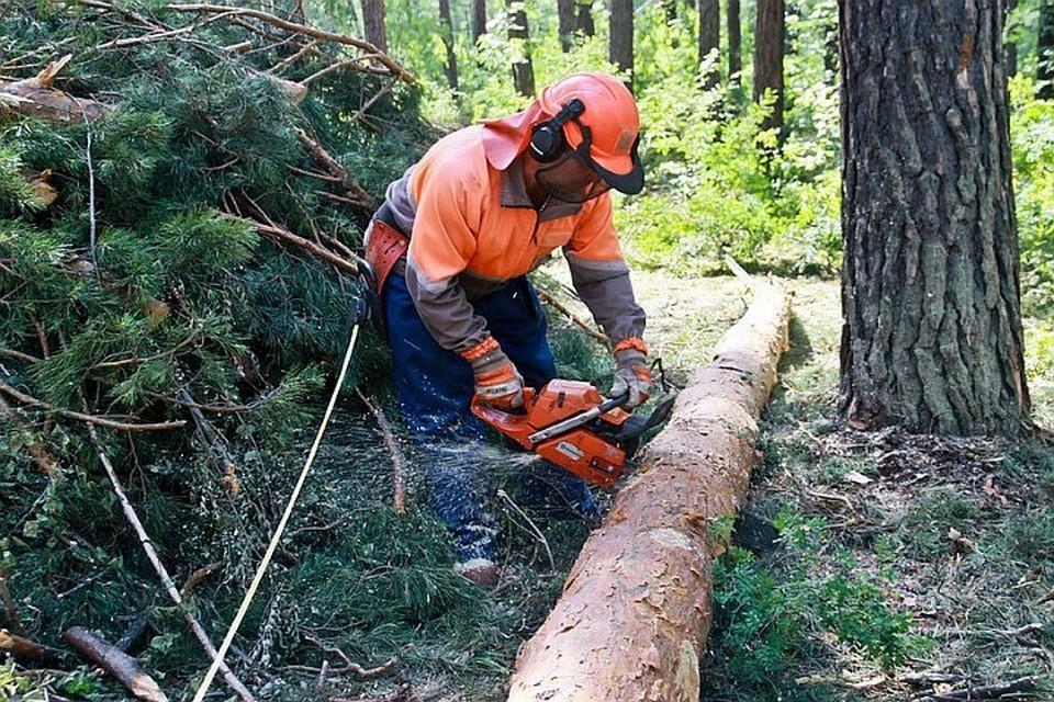 Более половины из 2,5 тыс. нарушений лесного законодательства – незаконная рубка.