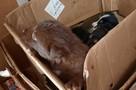 На мусороперегрузочной станции в Саратовской области спасли от смерти щенков в завязанном мешке