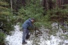 Зато бесплатно: желающие срубить елку к Новому году в Ленобласти застряли во многочасовых очередях
