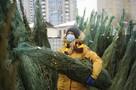 Куда сдать елку в Новосибирске после Нового года 2021: список мест, адреса