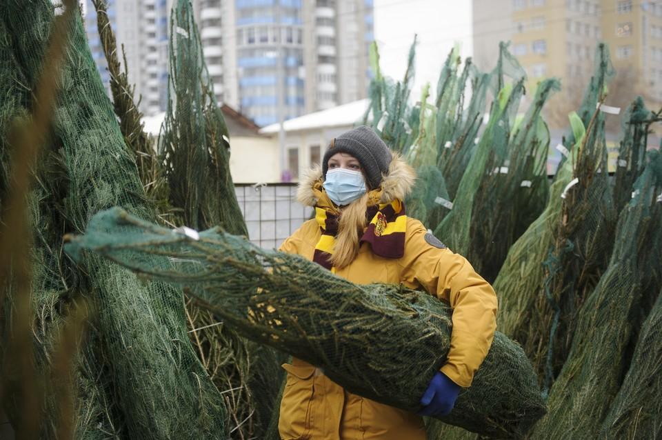 Сдавать елку придется самому - в 2021 году экологи отказались от сбора Новогодних елок