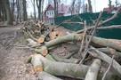 Власти снова изменили схему железной дороги в районе Холмогоровки