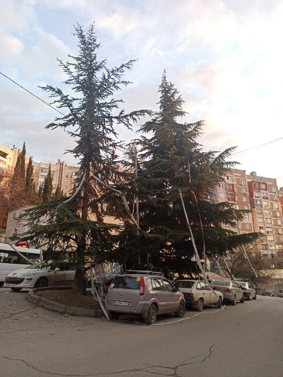 Какой-то шутник обмотал елки бумагой. Фото: Вова Николаенко/ПОДСЛУШАНО ЯЛТА/VK