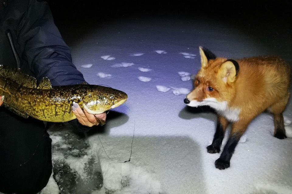 Рыжую красавицу очень заинтересовал чужой улов. Фото: Надежда Новикова