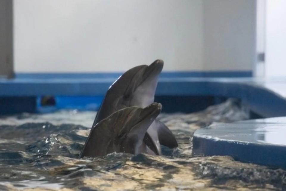 В Госдуме предложили запретить передвижные зоопарки и цирки