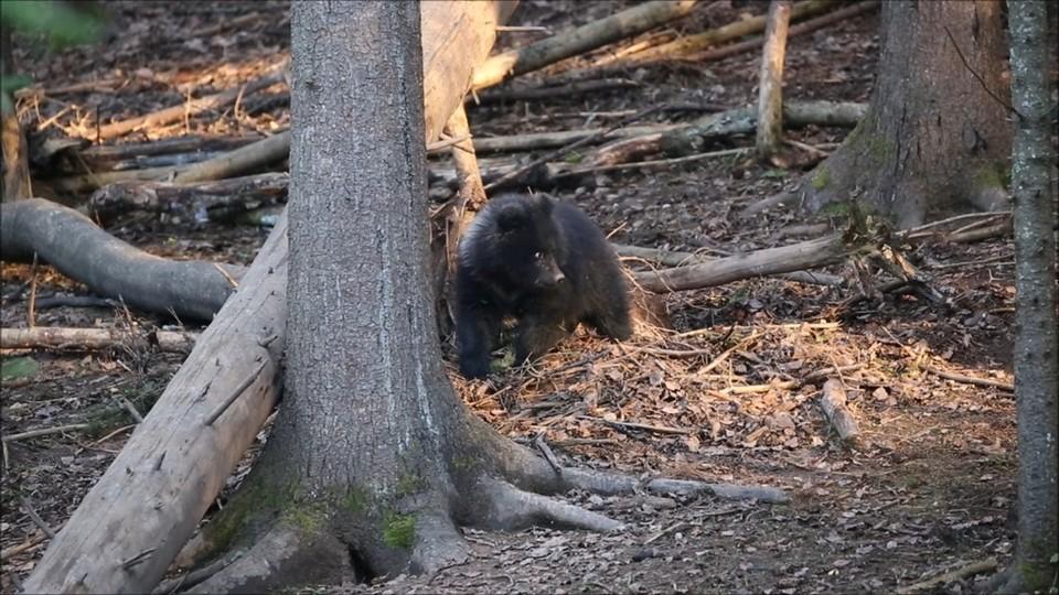 Фото: центр спасения медвежат-сирот