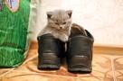 «Он пронзительно пискнул и больше не шевелился»: в Самаре котенка убили на глазах у ребенка