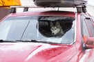 В Мурманске хозяин оставил в машине собаку, несмотря на мороз: мнение эксперта
