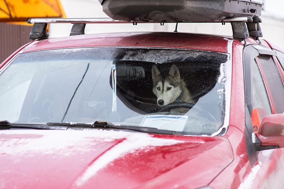 В Мурманской области не раз происходили случаи, когда в салонах промерзших машин находили собак.