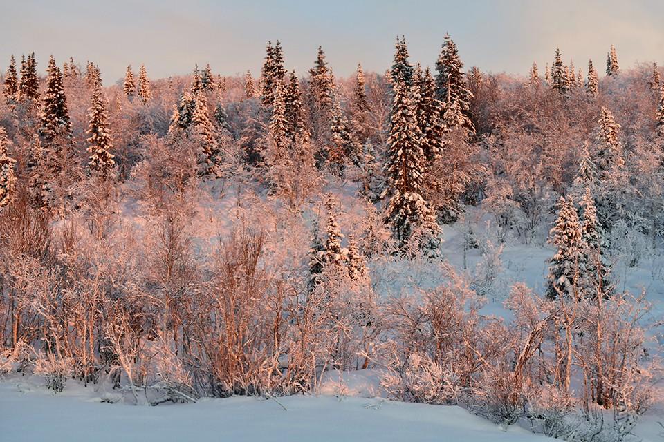 15 января в Мурманской области будет переменная облачность.