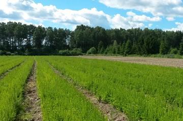 В Тверской области перевыполнили план посадки леса и отдали большую часть лесного фонда в аренду