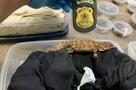 Смерть блогера от укуса змеи и ящеры за 100 тысяч рублей: Что известно о русском биологе, который пытался вывезти из Бразилии 200 животных