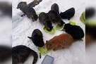 «Сердце разрывается, животные голодают»: на Урале закрытый из-за ковида санаторий превратился в кошачий город
