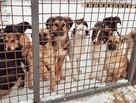 Прививка, стерилизация, реабилитация - и снова на улицу: как в Волгограде живут собаки в питомнике для бездомных