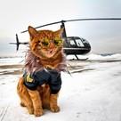 «Да он просто Playboy»: кот Симба из Приморья удивил новой фотосессией